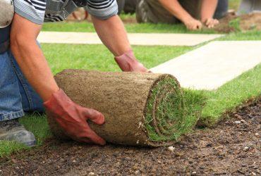 Çim Üretim ve Uygulama